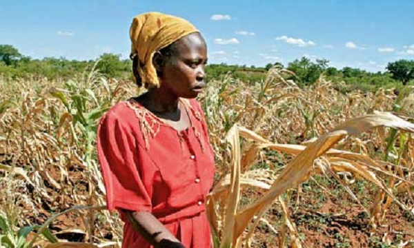 Zimbabwe seeks $1.5B to prevent starvation due to disastrous drought