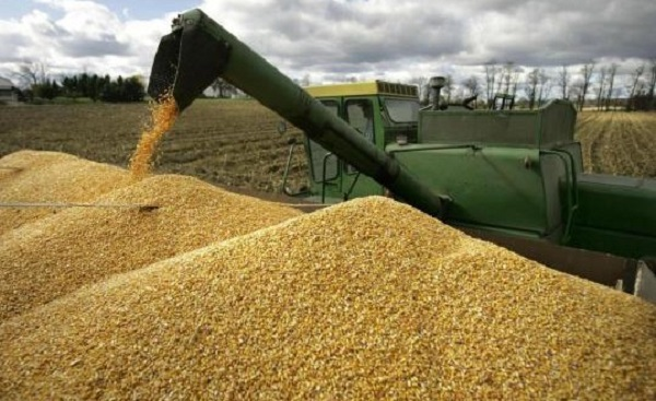Govt mobilised $260 million to import grain in Zimbabwe