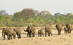Zimbabwe wants to move elephants to a 'safer environment' – by selling them to …