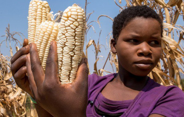 Zimbabwe asks for funding to avoid food shortages