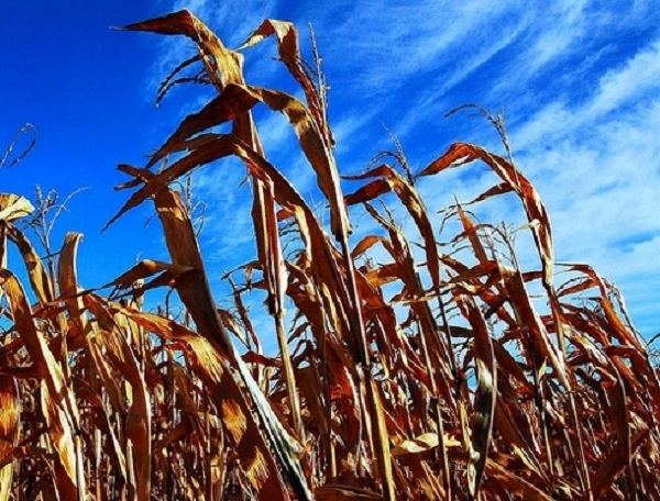 Zimbabwe turns to Ukraine for help with maize supply