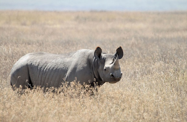Surge in poaching sees 50 Zimbabwe rhinos killed
