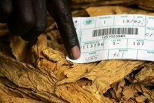 Zimbabwe warned against relying on commodity exports